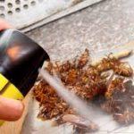 Cách phổ biến diệt côn trùng trong nhà vệ sinh